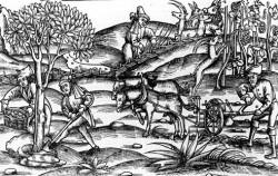 """Un'illustrazione delle """"Georgiche"""" di Virgilio che mostra la coltivazione dell'uva"""