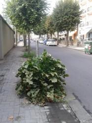 Particolare dell'arbusto divelto
