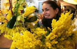Mimose, simbolo della giornata della donna