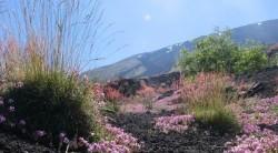corretta-escursione-intraleo-monte-de-fiore (650 x 360)