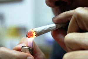 cannabis libera