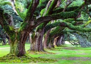 Risultato immagini per gli alberi e la natura