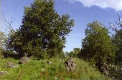 Resti arborei del Bosco di Aci
