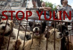 corret stop cane a Yulin