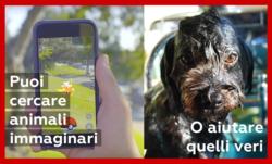 campagna cani  disugual