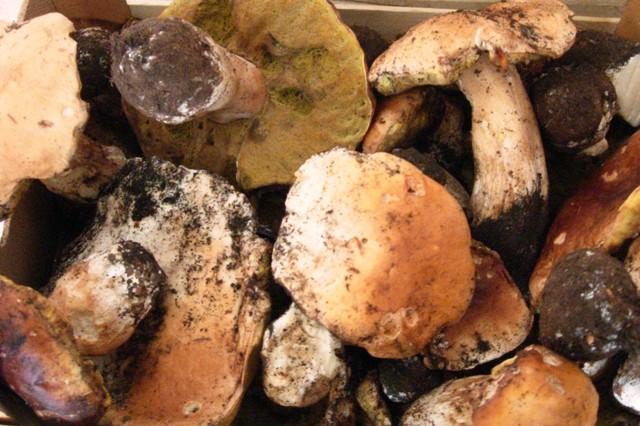 Racconti / La piccola cercatrice di funghi