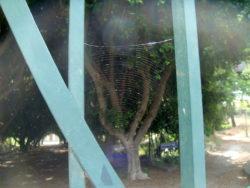 Anche una bella ragnatela decorava il cancello d'ingresso