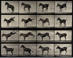 a-horse-rearing-and-bucking-eadweard-muybridge-1887-25-5-x-32-cm-courtesy-wellcome-library-london-744-x-593-372-x-296
