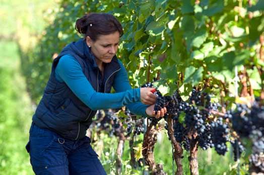 Agricoltura / Sono 215mila le aziende italiane guidate da donne. Un mix di territorio, turismo, cultura