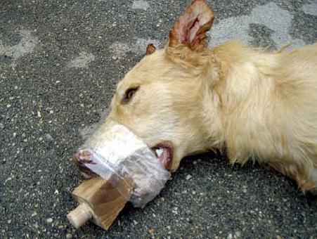 Società / Sempre più frequenti i casi di maltrattamenti agli animali. Ma agli uomini va insegnato sin dall'infanzia come rispettarli