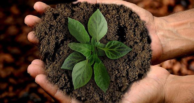 """Riflessione / Domenica 22 aprile la Giornata della Terra. """"Difendiamo a ogni costo vita, aria, acqua e cibo"""""""