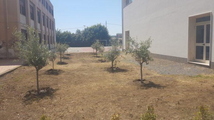 """Ecologia / Per la """"Giornata della Terra"""" il liceo Gulli e Pennisi di Acireale inaugura 41 ulivi donati dal Rotary club"""