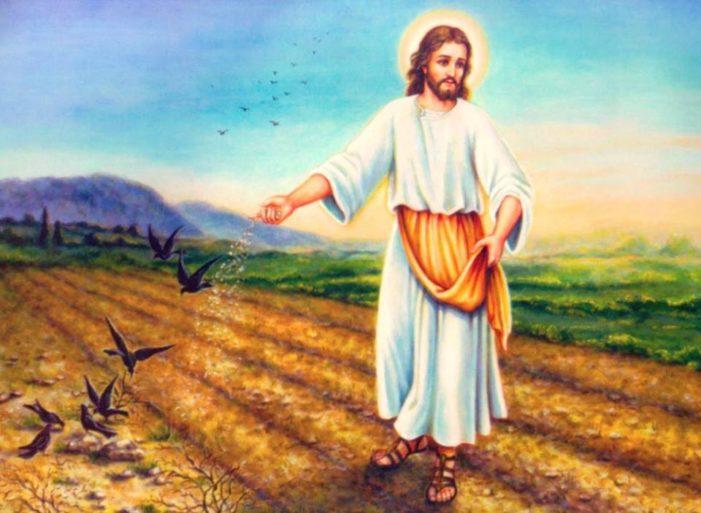Vangelo della domenica (17 giugno) / Quando Dio getta nell'uomo il seme dell'amore, esso germoglia vigoroso nei cuori