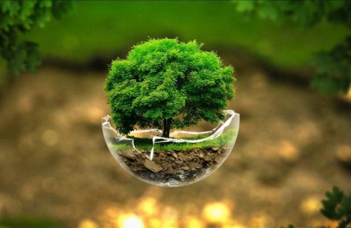 """Cura del Creato / Uomini e ambiente: """"Coltivare l'alleanza con la terra"""""""