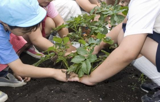 """Acicatena /  Assegnazione di orti  didattici alle scuole. Il sindaco Oliveri:""""Incoraggia il dialogo tra i ragazzi e il territorio"""""""