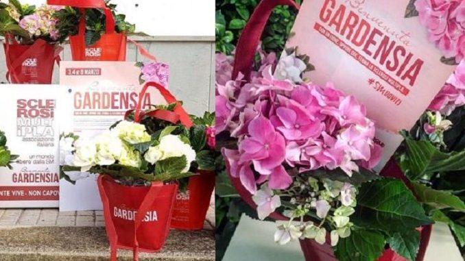 8 Marzo – 1 / In 5mila piazze italiane gardenie e ortensie per sostenere la ricerca sulla sclerosi multipla