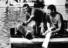 Aci Trezza Tradizioni paese Malavoglia U pisci a mari