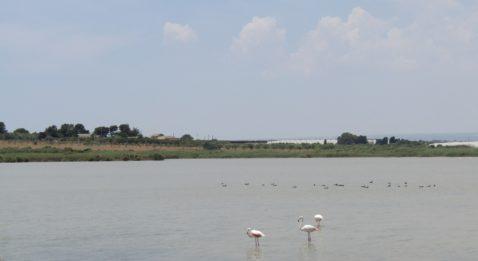 Marzamemi-borgo-marinaro-pantano-fenicotteri