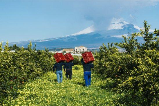 frutta della terra di Sicilia