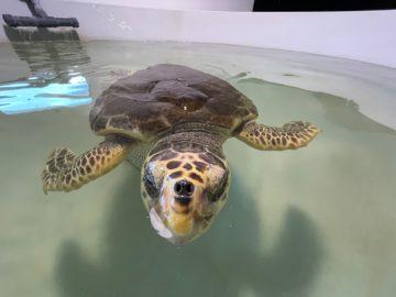 plastic free pianeta tartarughe
